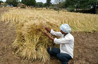 印度两万农民请求自杀